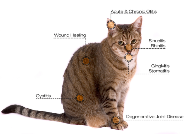 veterinary laser treatment conditions for cat