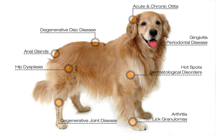 diseases treated by dog laser therapy machine
