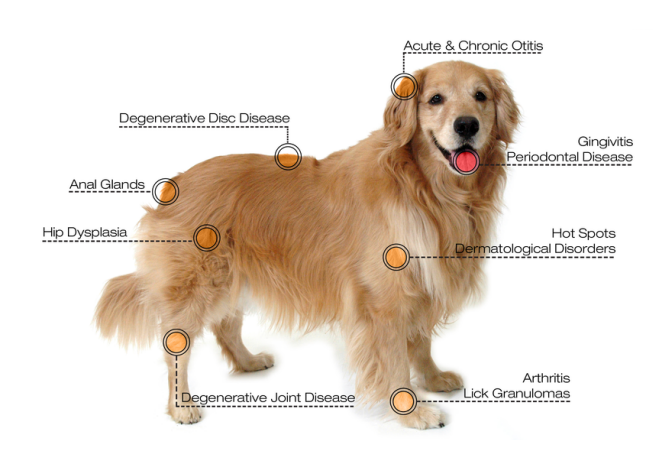 veterinary laser treatment conditions for dog
